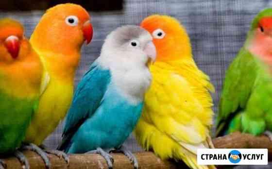 Передержка птиц Ижевск
