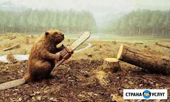 Спил деревьев Ковров