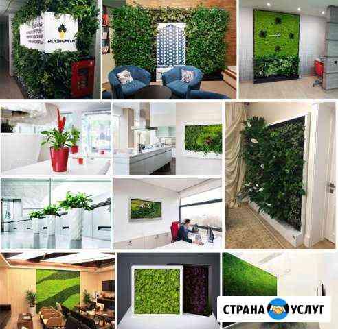 Озеленяем любые помещения - офисы, дома и т.д Тюмень