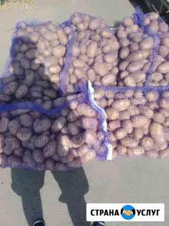 Картофель Дивное