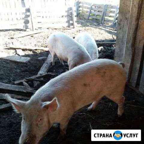 Мясо Назарово