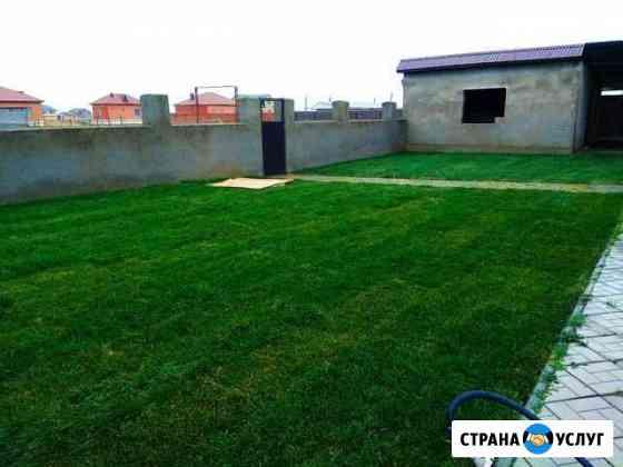 Рулонный, посевной и искусственный газон. Озеленен Махачкала
