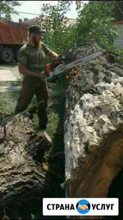 Спил деревьев, пилим деревья, пильщик, вальщик Грозный