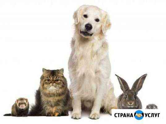 Передержка для домашних животных Арамиль