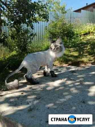 Стрижка кошек и собак на дому сегодня Челябинск