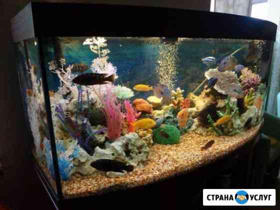 Обслуживание аквариумов Феодосия