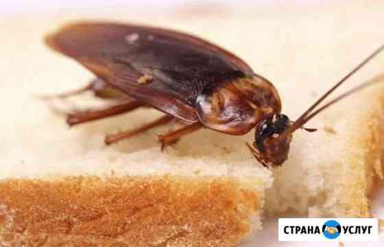 Уничтожение насекомых Владивосток