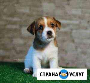 Выгул собак Ростов-на-Дону