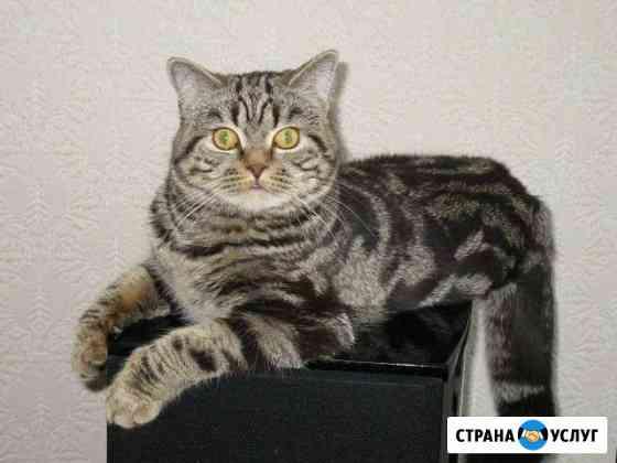 Вязка кот Филберт приглашает Камышин