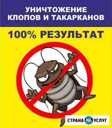 Уничтожение клопов, тараканов, муравьев и клещей Тамбов