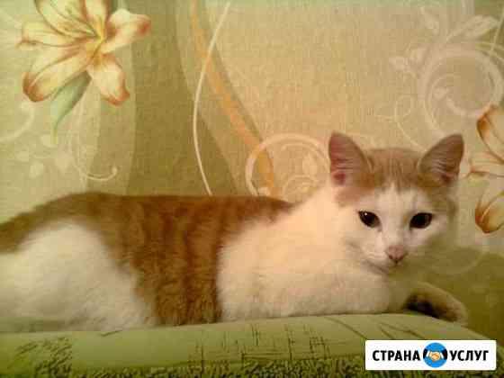 Передержка кошек и котов Омск