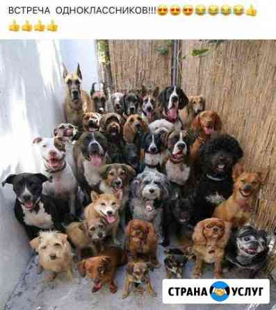 Коррекция поведения собак Екатеринбург