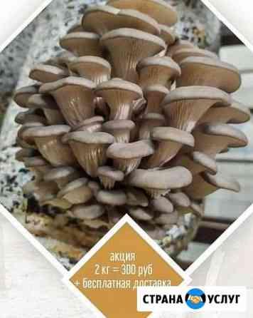 Доставка грибов Саратов