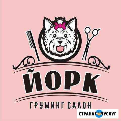 Стрижка собак и кошек Кострома