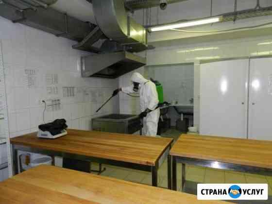 Уничтожение тараканов, грызунов Иваново