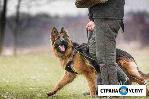 Дрессировка собак Челябинск
