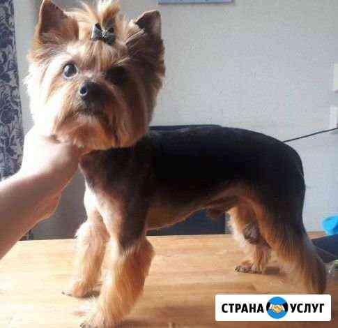 Груминг (стрижка) собак во Всеволожске Всеволожск