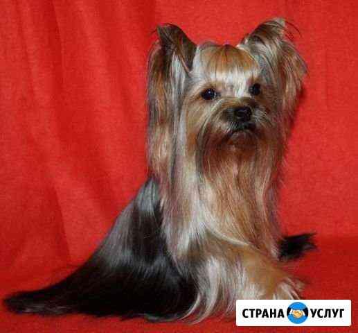 Инструктор по вязке собак Новокузнецк