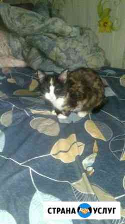 Кошечке нужен кот Пермь
