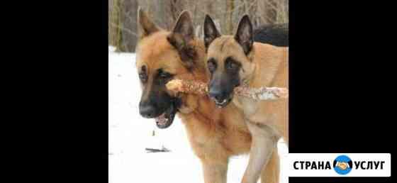 Дрессировка собак Нижний Тагил