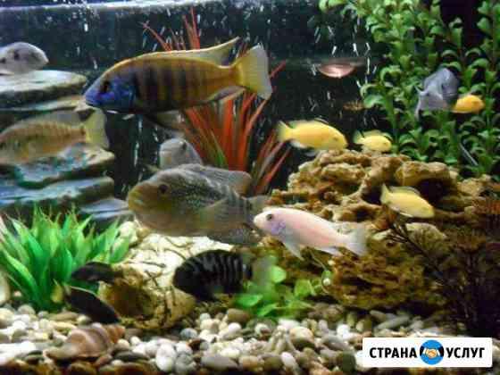 Обслуживание аквариума (чистка) Екатеринбург