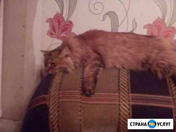 Передержка животных Белогорск