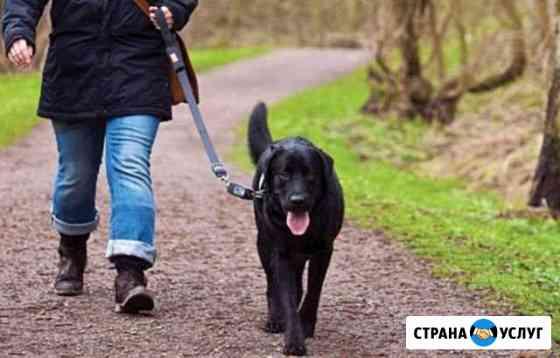 Выгул собак Ивангород