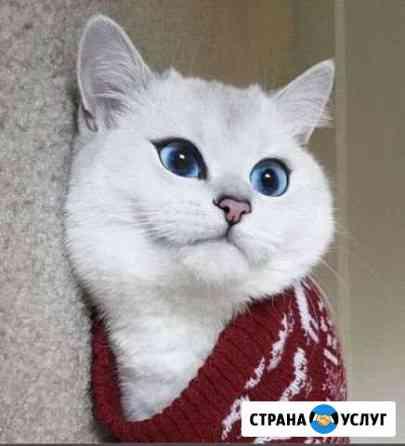 Няня для животных,передержка ) Волгоград