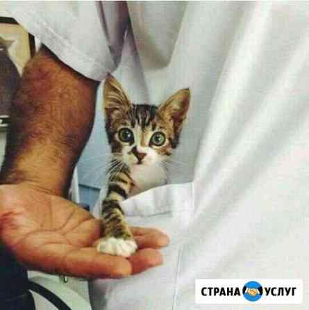 Ветеринарная помощь с выездом на дом Стерлитамак