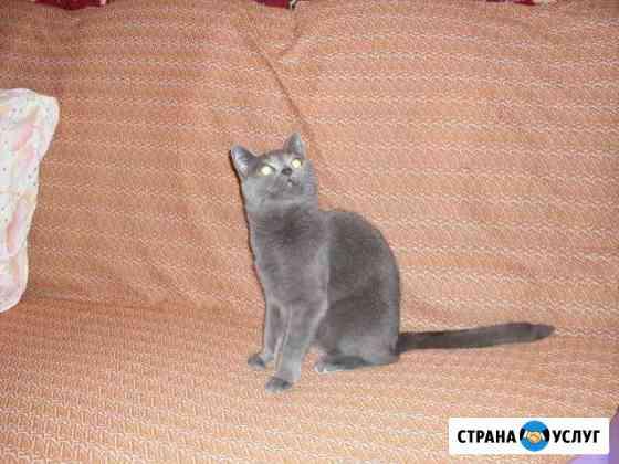 Передержка кошек на дому, у нас как дома Ростов-на-Дону