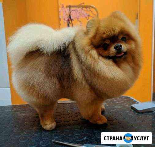 Стрижка собак, груминг собак и кошек Санкт-Петербург
