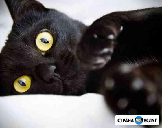 Ветеринарный врач (вызов на дом) Тверь