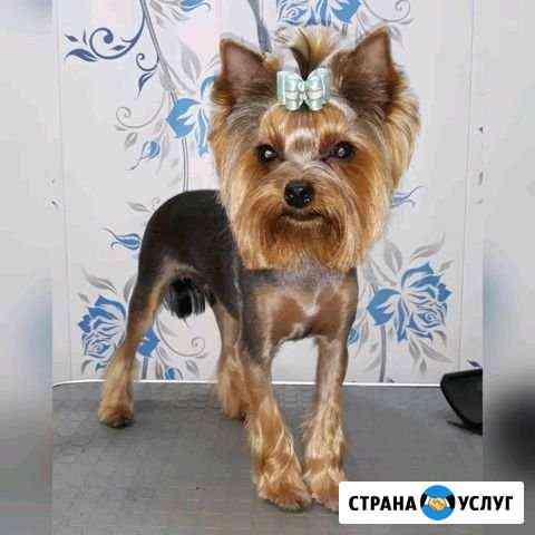 Стрижка собак Иркутск Иркутск
