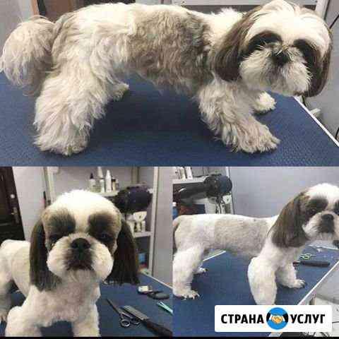 Стрижка собак Краснодар