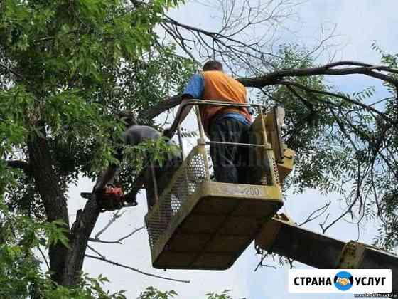 Обрезка, спил, опиловка деревьев, вывоз мусора Астрахань
