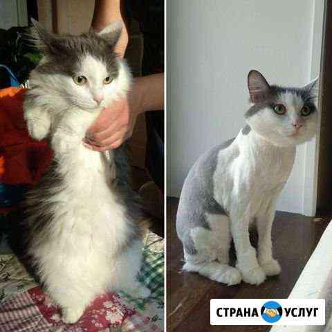 Стрижка кошек и собак с выездом на дом Уфа