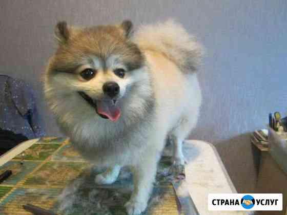 Грум- стиль домашних любимцев Брянск