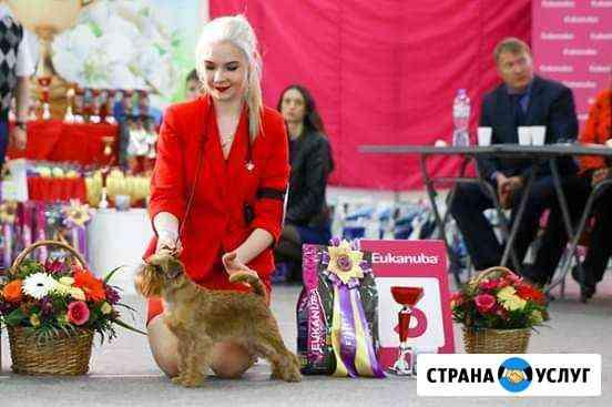 Услуги Хендлера (показ собаки на выставке) Нижний Тагил
