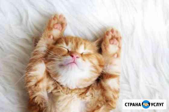 Передержка кошек Челябинск