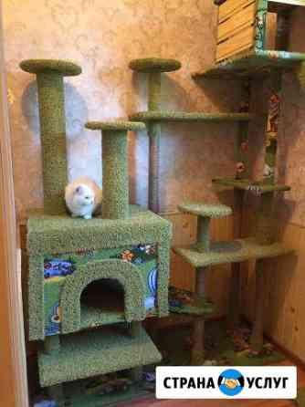 Передержка животных в гостинице для кошек Ростов-на-Дону