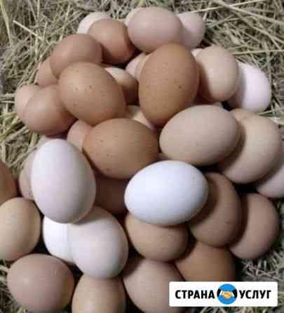 Яйцо домашних курочек Павлово