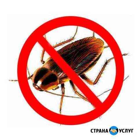 Уничтожение насекомых (клопов,тараканов,блох и т.д Ишим