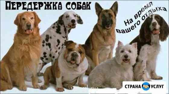 Передержка животных Архангельск