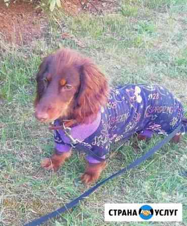 Индивидуальный пошив одежды для собак Севастополь