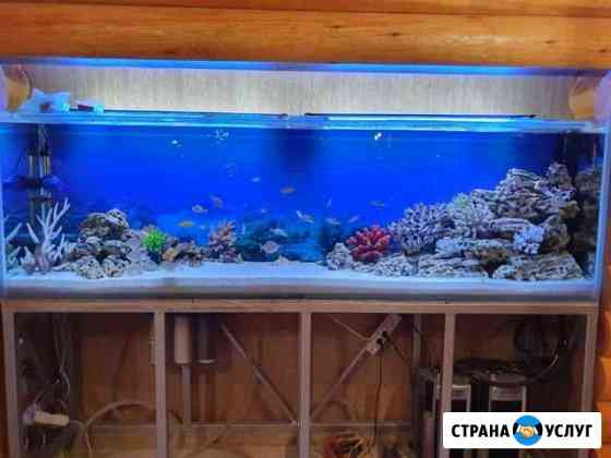 Обслуживание и установка аквариумов Курск