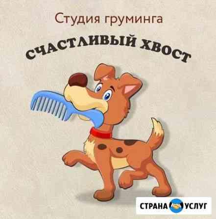 Стрижка собак и кошек Липецк