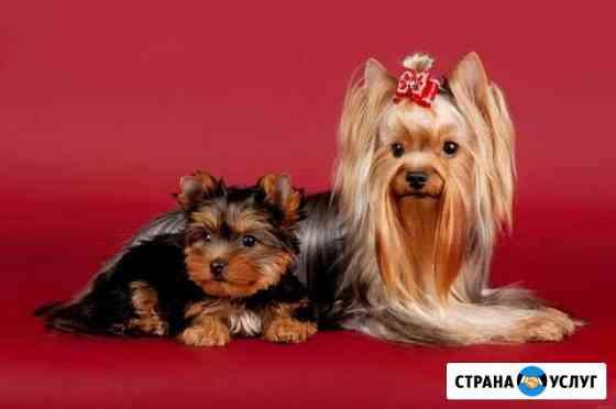 Фото и видеосьемка Санкт-Петербург