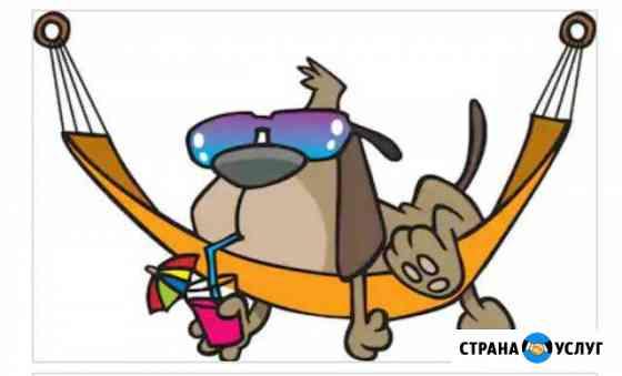Передержка собак на время отпуска Казань
