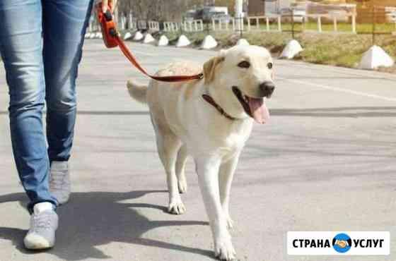 Выгул собак Кандалакша
