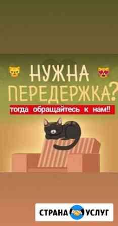 Домашняя передержка кошек Казань